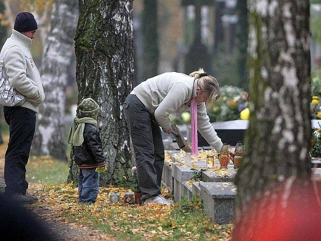 Břízy na neředínském hřbitově