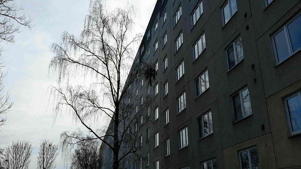 Vánoční stromeček, který někdo ve Fischerově ulici v Olomouci vyhodil z okna bytu, se zasekl v půli cesty - v koruně stromu
