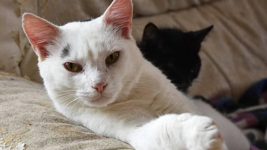 Mokré a divoké dospívající kočička