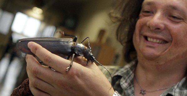 Olomoučtí biologové přivezli ze své expedice vAmazonii živého největšího brouka světa, titána obrovského.