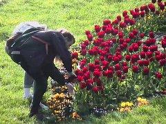 Trojice si natrhala náruč tulipánů urostřed Rudolfovy aleje
