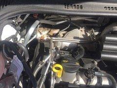 Agresivní kočka uvízla v autě v Handkeho ulici v Olomouci, nechtělo se jí ven