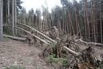 Kvůli stovkám popadaných a vyvrácených stromů vyhlásila obec Tovéř zákaz vstupu do lesa