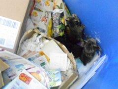 Koťata v kontejneru na papír v Zikově ulici v Olomouci