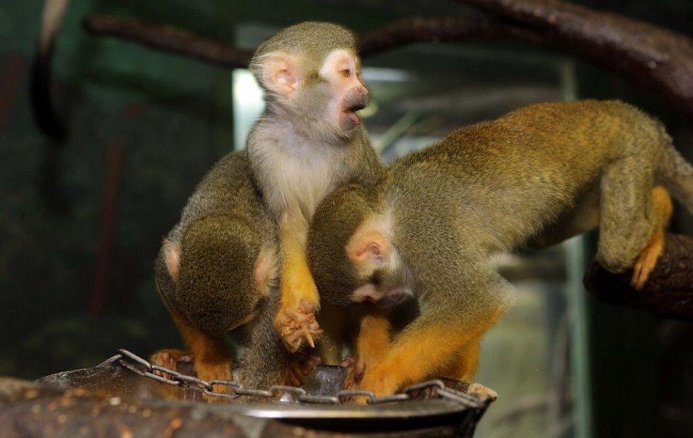 Krmení kotulů v olomoucké zoo