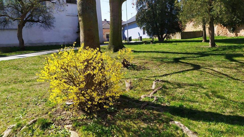 Jaro v Mohelnici. Duben 2020