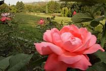 Botanická zahrada v Olomouci - rozárium