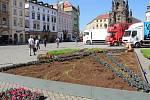 Sázení květnového koberce na Horním náměstí v Olomouci, 8. září 2020