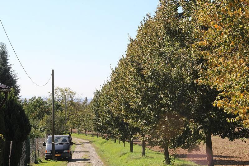 Bukovany. Lipovou alej ke kapli svatého Donáta místní sami vysadili. Stromy adoptovali a pečlivě se o ně starali.