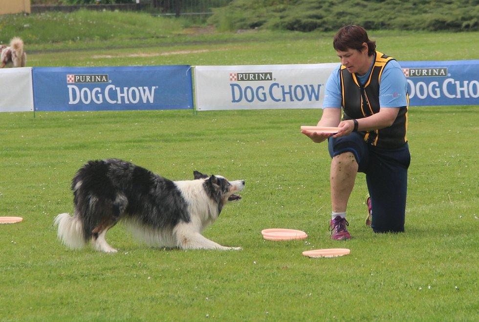 Mezinárodní závody Key DiscDog Freestyle o víkendu představují v Olomouci sport dogfrisbee.