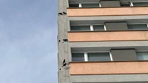 Kavky buší do fasády ve Šmeralově ulici v Olomouci, rády by zahnízdily
