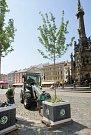 Instalace mobilní zeleně na Horním náměstí v Olomouci v červnu 2008