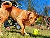 Ve městech žijí také tisíce psů. Problémy? Úklid a volný pohyb