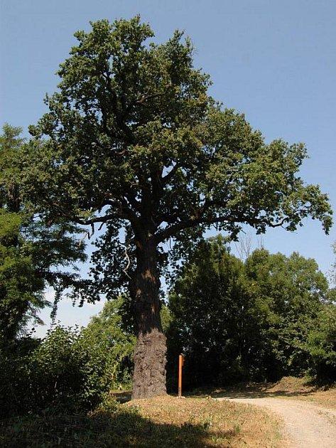Hromův dub