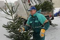 Svoz vyhozených vánočních stromků