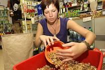 Výkup jader vlašských ořechů