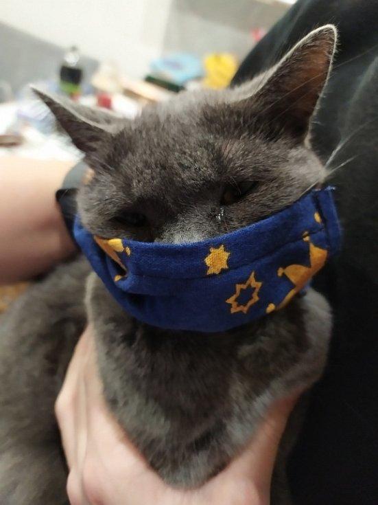 Držovice . I naše kočka chodí s rouškou. Ušila jsem roušky pro celou rodinu, tak i kočce, aby si nepřipadala diskriminována.  Ale vůbec se jí to nelíbí.