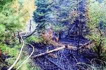 Okolo devíti hodin bojovali hasiči s plameny, které zasáhly les v blízkosti obce Týn nad Bečvou. Poté na místě ještě hlídkovali dobrovolníci.