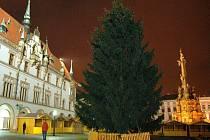 Na Horním náměstí v Olomouci usadili vánoční strom