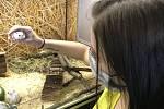 V době koronavirových omezení vzrostl zájem o drobné domácí mazlíčky. Nejvíce se prodávají hlodavci. (7.května 2020)