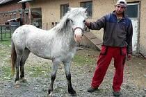 Zatoulaný poník, kterého našli v Těšíkově