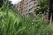 Přerostlá tráva na sídlišti. Ilustrační foto