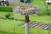 Na oblíbeném čapím hnízdě v Domašova nad Bystřicí to letos vypadá na čtyři mláďata. Vloni kvůli nepřízni počasí nepřežilo žádné