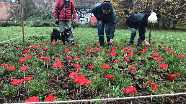 Makové pole v Bezručových sadech v Olomouci  jako připomínka mezinárodního Dne válečných veteránů. 11. listopadu 2020
