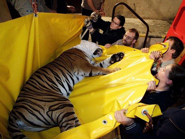Pracovníci pražské zoo evakuovali 2. června pavilon velkých kočkovitých šelem. Spodní část zoologické zahrady, která leží v pražské Troji přímo u Vltavy, byla 3. června již zatopená.