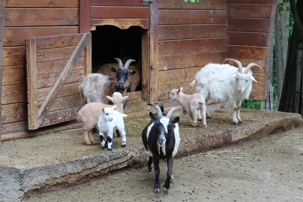 Zoo Olomouc těsně před lockdownem