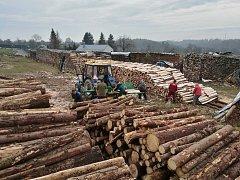 Obecní lesy v Lipině decimuje kůrovec.  A obec se rozhodla je sama zpracovávat.