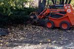 Pokračuje druhá etapa revitalizace zeleně volomouckých historických parcích podle Projektu obnovy vegetačních prvků. Kácelo se již v Čechových sadech. Pryč šly dva problematické buky, které ustoupily lepšímu růstu dvou listnatých příbuzných.