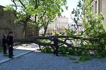 Větrem narušený strom u šternberského gymnázia museli pokácet