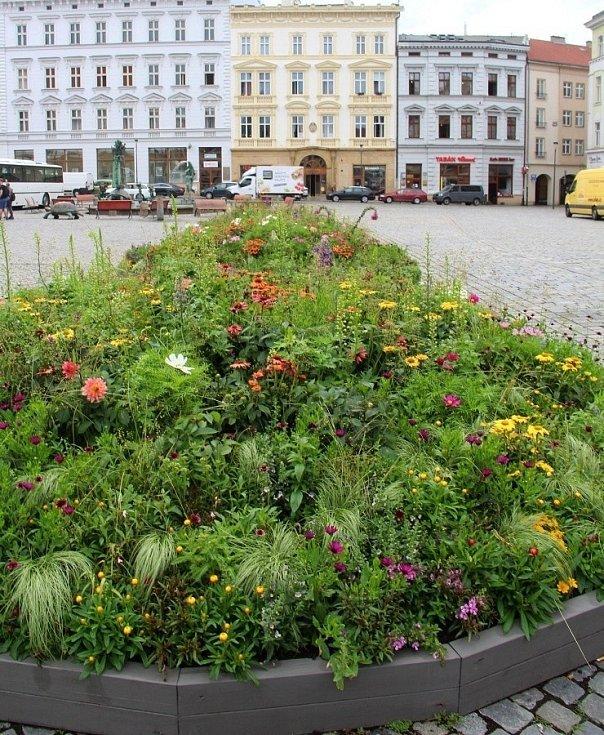 Záhony s letničkami mezi Arionovou kašnou a Sloupem Nejsvětější Trojice na Horním náměstí v Olomouci, červen 2021