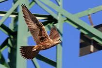 Nezabezpečené elektrické vedení znamená pro ptáky smrtelné nebezpečí