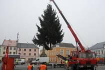 Od pátku 23. listopadu stojí na náměstí Přemysla Otakara v Litovli letošní vánoční strom – smrk měřící 12 metrů
