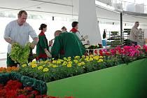 Přípravy na Floru v pavilonu A