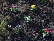 Jarní květy, březen 2017