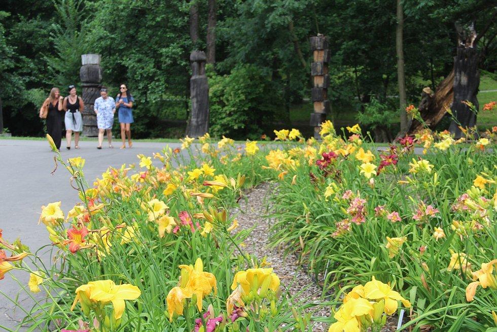 V olomoucké botanické zahradě právě kvete několik desítek druhů atraktivních denivek.