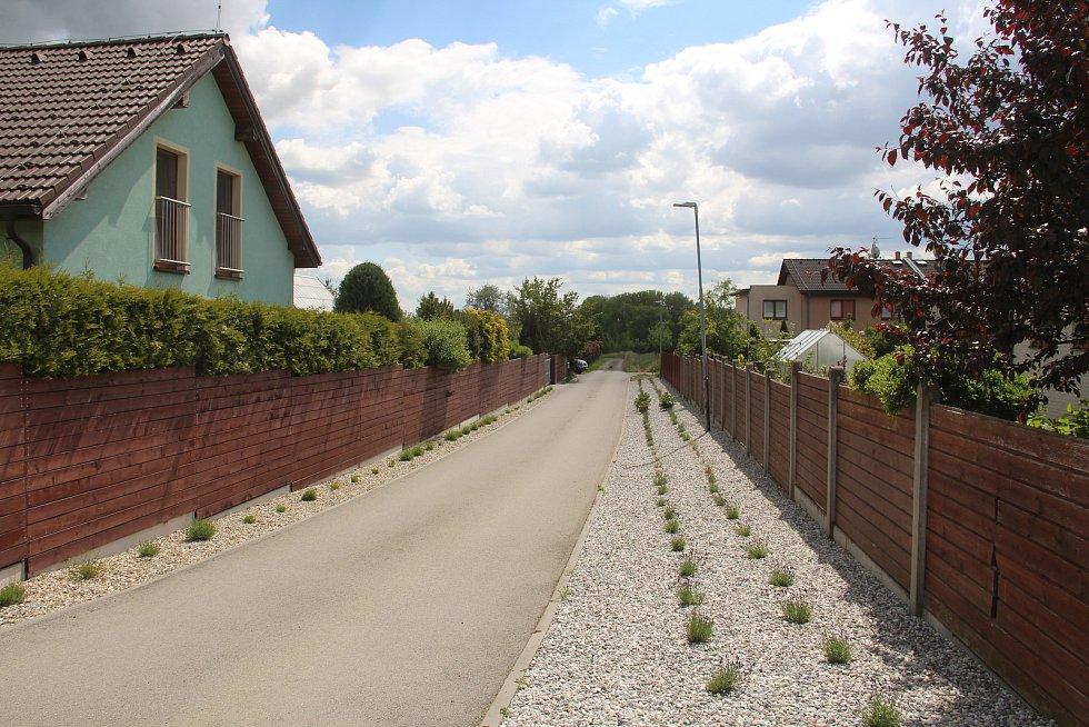 Nově vysázené levandule v Křelově v létě provoní celou ulici.