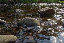 Vysychající koryta řek trápí v těchto dnech rybáře na Olomoucku. Pravidelně kontrolují stav hladin a množství kyslíku, zatím ještě rybám stačí.