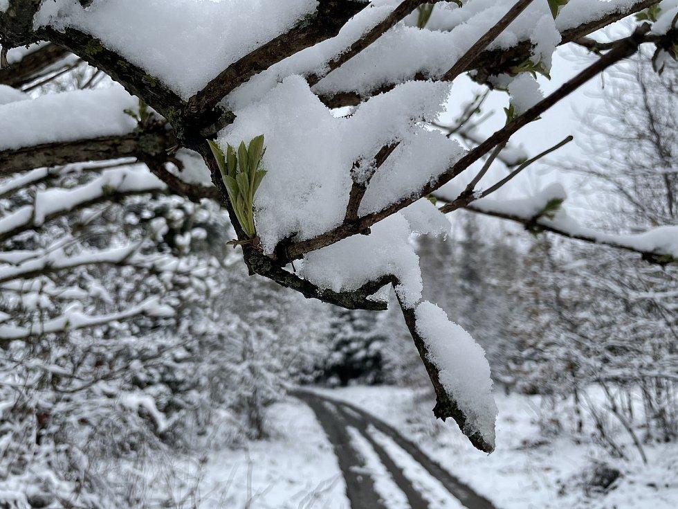 Návrat zimy na Pohořanech, 13. dubna 2021