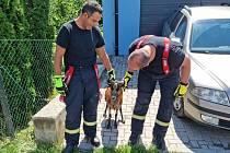 Prchajícího kamerunského berana se podařilo v pondělí dopoledne  odchytit týneckým dobrovolným hasičům.