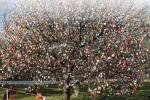 Kraslicový strom
