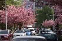 Rozkvetlá ulice U Kovárny v Olomouci.