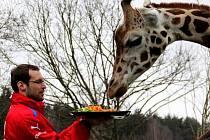 Petr Čech v olomoucké zoo