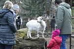 Zoologická zahrada na Svatém Kopečku u Olomouce, 5. 12. 2020