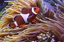 Mořská akvária v olomoucké zoo. Ilustrační foto