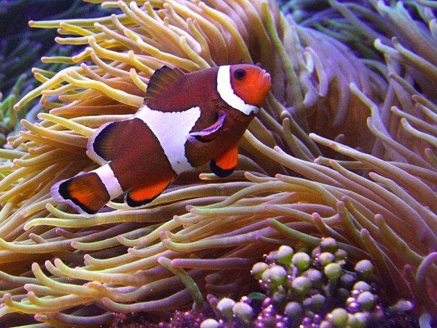 Mořská akvária volomoucké zoo. Ilustrační foto