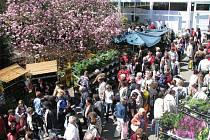 Výstava květin Flora Olomouc